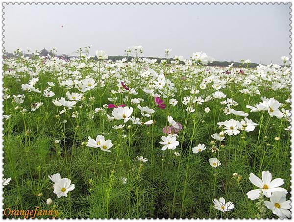 09橋頭 花田喜事-09.jpg