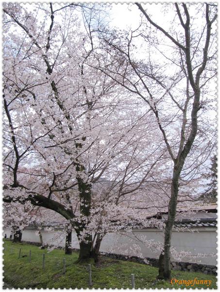 櫻京都-060.jpg