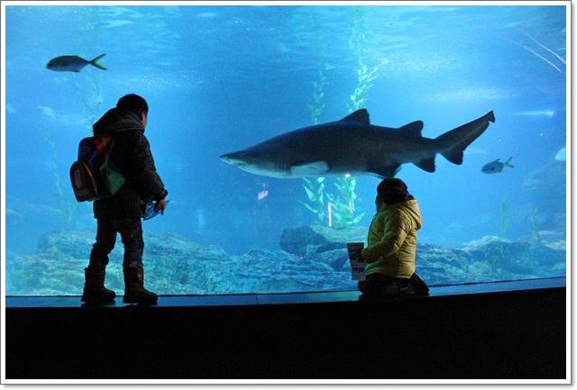 水族館10