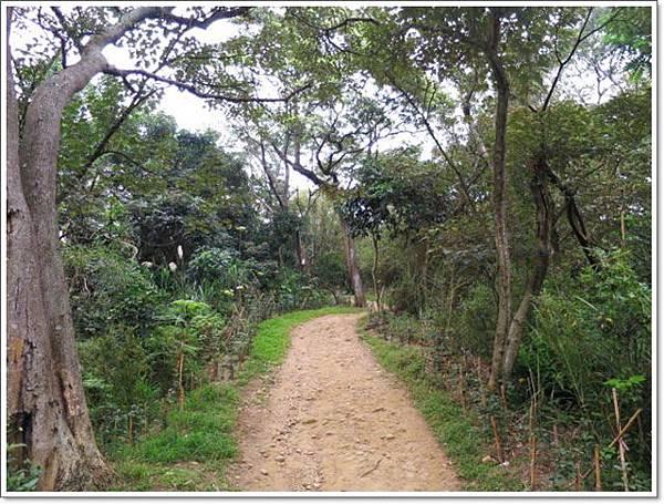 羊稠森林步道5.jpg