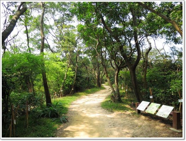 羊稠森林步道18.jpg