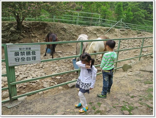 虎頭山春天農場12.JPG