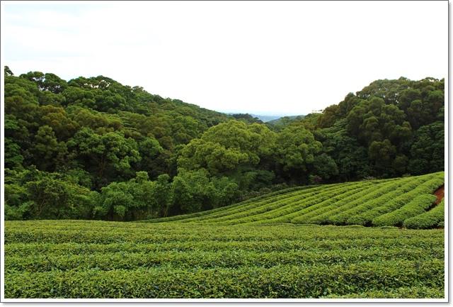 太平濱海步道24.JPG