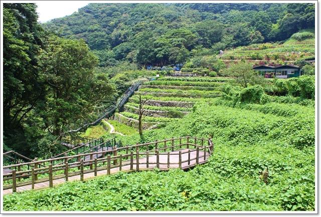 竹子湖3.JPG