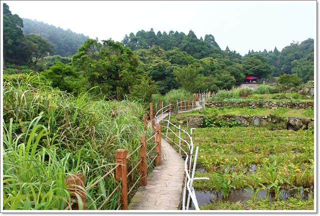 竹子湖16.JPG
