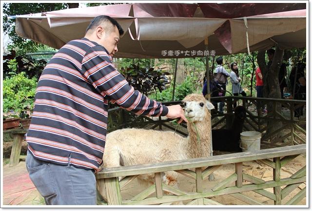 羊世界15.JPG
