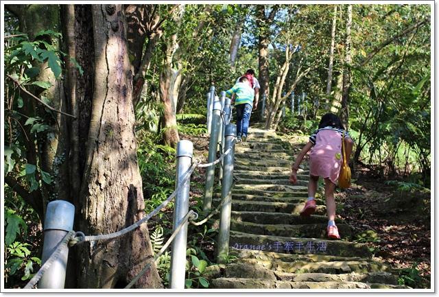 桐花公園3.JPG