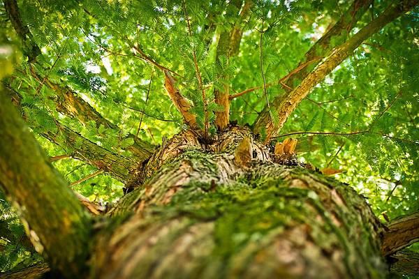 tree-1750784_960_720