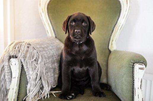puppy-2041215__340