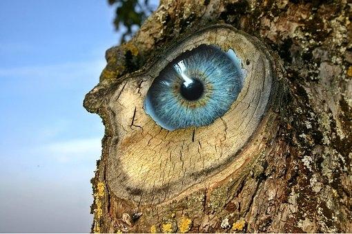 eye-1843597__340.jpg