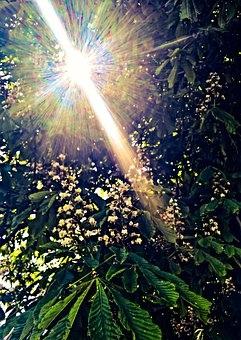 nature-2383464__340.jpg