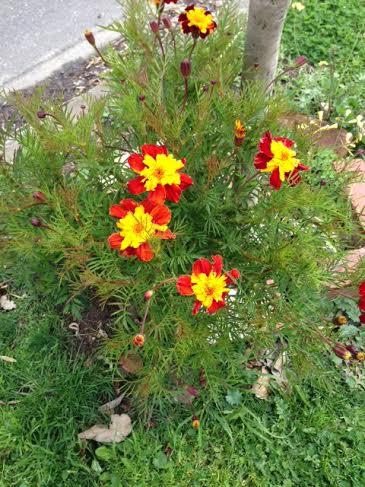 Flower 111888