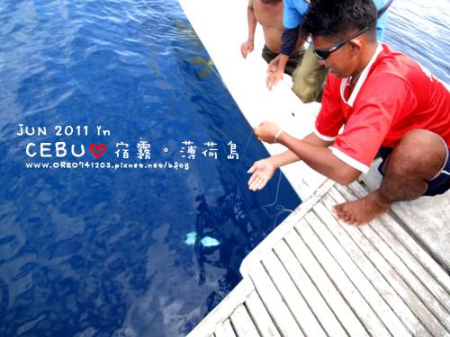 看海豚10.jpg