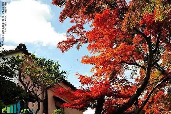 阪本古道的楓紅盛景