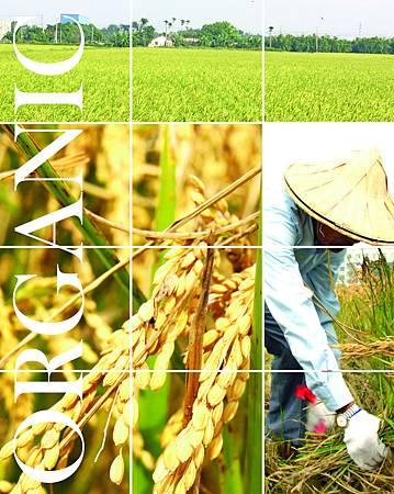 柑仔店蔬米類掛牌A4.jpg