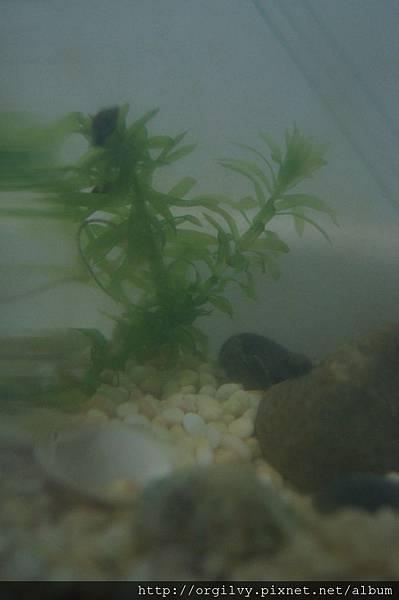 野生小魚與水草