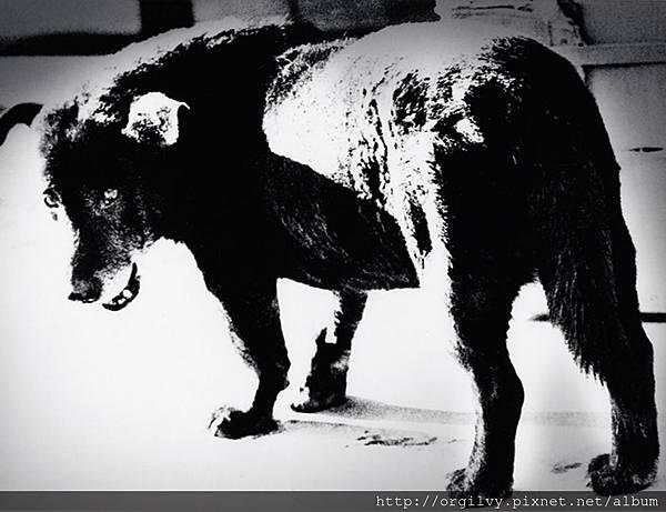 black dog.jpg
