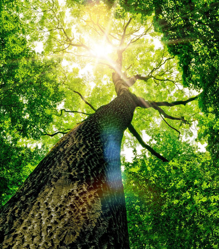 樹是人類朋友的15個原因