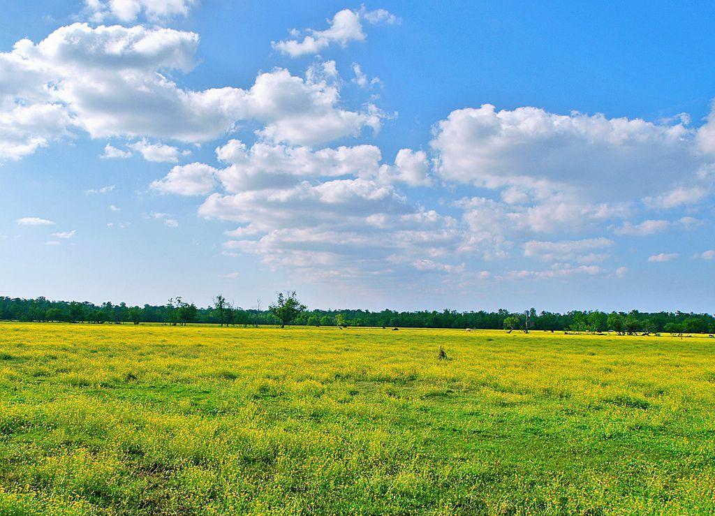 土地的春天