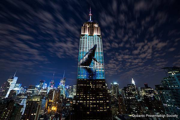 Empire State NY_ Whale _credit OPS.jpg