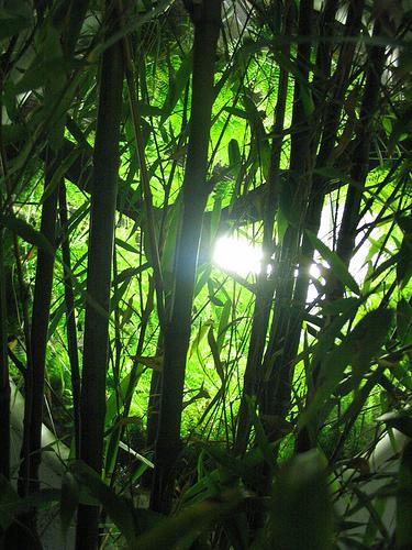 《Sunshine / 太陽浩劫》植物園一景
