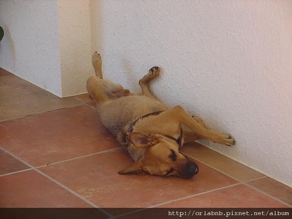 FLY 有趣的睡姿