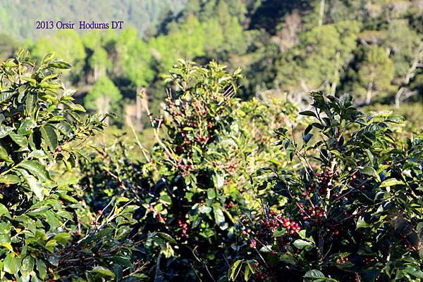咖啡產區---中美洲