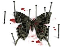 blood butterfly.jpg