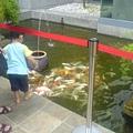 花園水池~~