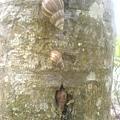 蝸牛與樹~~