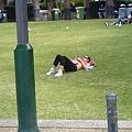 南岸公園裡曬太陽的澳洲人