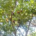 金剛鸚鵡3