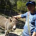 阿晃與驢~