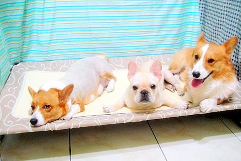 寵物騰空床,高架涼床,玩酷子弟網路商店,www.ang.tw