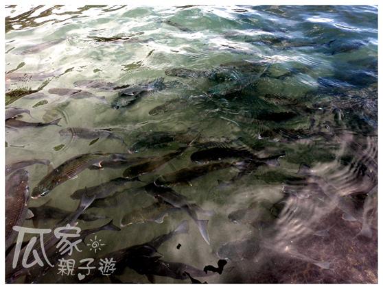 富山護魚區_04.jpg