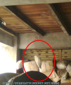 門口的白鷺鷥