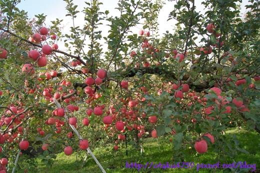 青森 Apple Land飯店-蘋果園