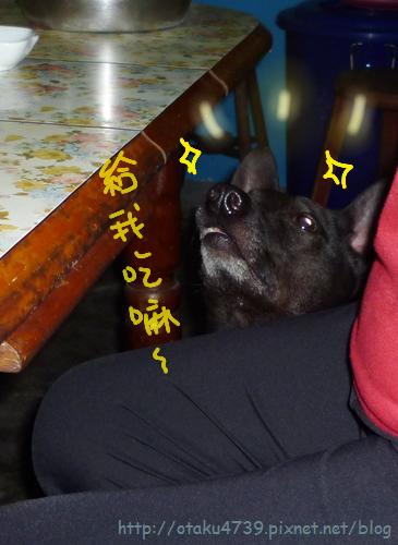 餐桌旁的阿統犬