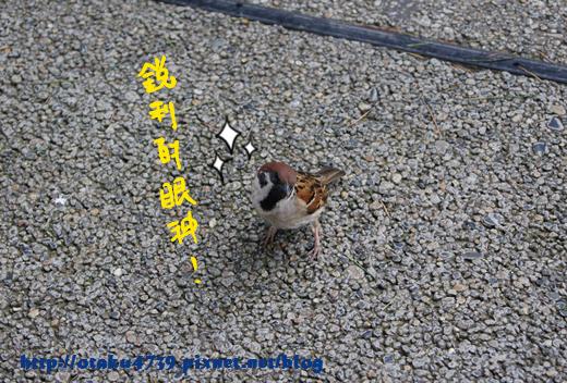 淺草寺-麻雀.png
