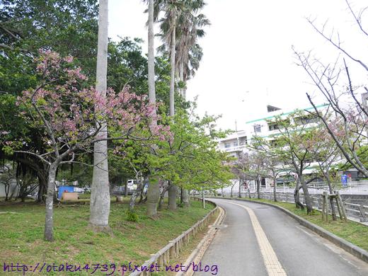與儀公園-櫻花1