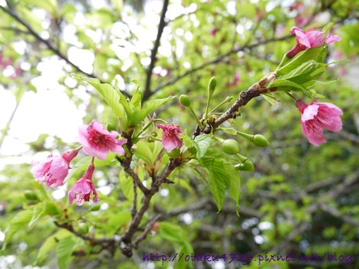 與儀公園-櫻花發新芽