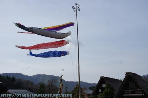 白川鄉合掌村-鯉魚旗1