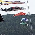 郡上八幡-街景-鯉魚旗2