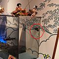 郡上八幡-博物館-雛人形5