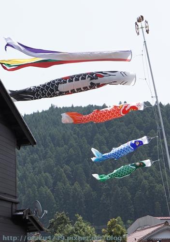鯉魚旗.JPG