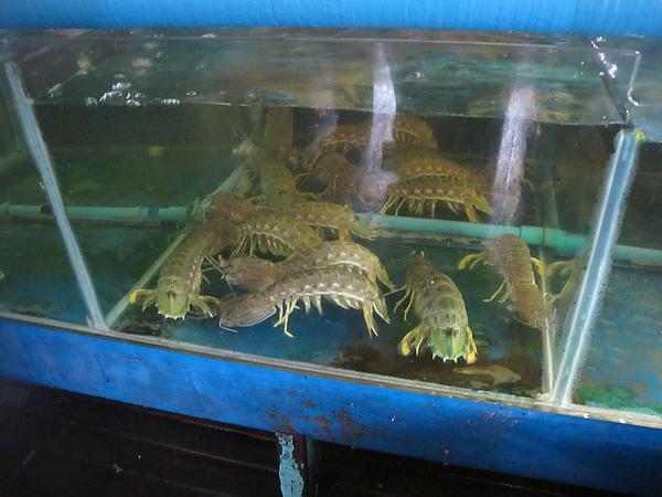 20100716緬甸 062.jpg