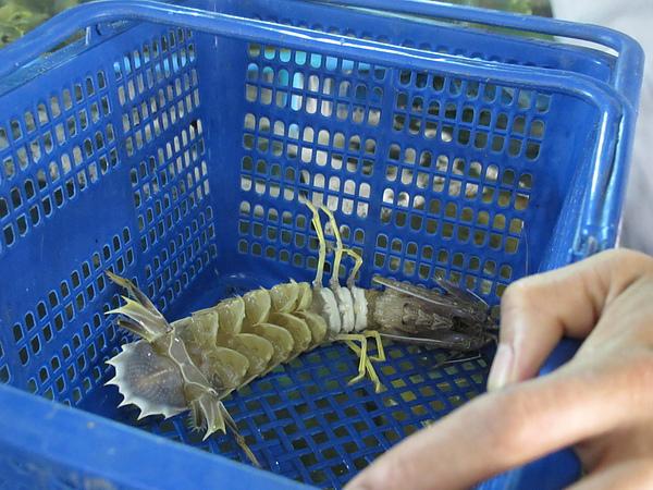 20100716緬甸 064.jpg