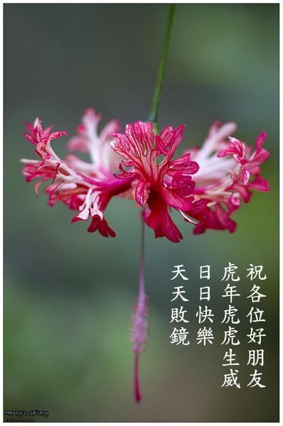 CNY2010.jpg