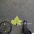 20131123_232541_副本