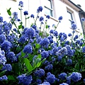 前往民宿 家戶的花燦爛